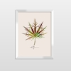 Quadro Decorativo Dorno Kruco Libertarte All Leafman