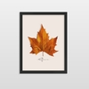 Quadro Decorativo Kanada Fairo Libertarte All Leafman - comprar online
