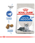 Royal Canin Indoor 7+ Gato - comprar online