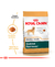 Royal Canin Golden Retriever Adulto - comprar online