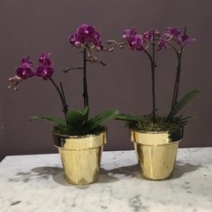 Mini Orquídeas en maceta Dorada en internet