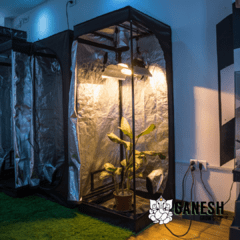 Carpa Indoor BellaVita