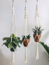 Kit 3 Hang Plants Selena