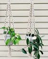 Kit 2 Hang Plants Diana