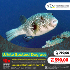 White Spotted Dogface