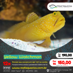 Yellow Watchman