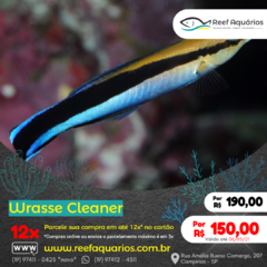 Wrasse Cleaner