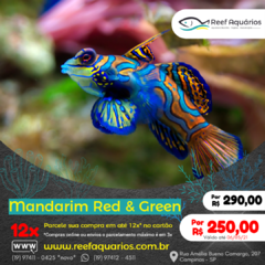 Mandarim Red & Green