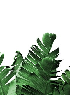 Banana Leaves I en internet