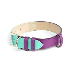 COLLAR COLORS - Morado turquesa