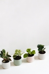 Duo Mini CIlindro + Peperomia