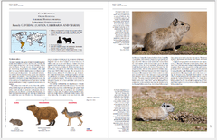 Imagen de Handbook of the Mammals of the World - Volume 6