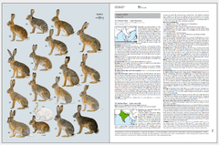 Handbook of the Mammals of the World - Volume 6 en internet