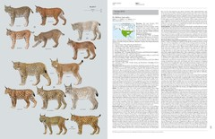 Handbook of the Mammals of the World - Volume 1 Carnivores en internet
