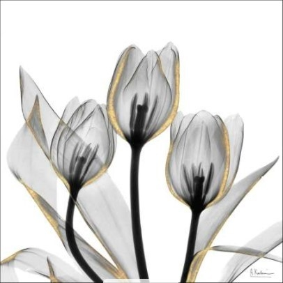 Gold Embellished Tulips V - Albert Koetsier