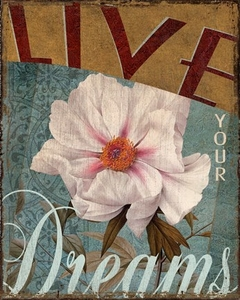 Live your dreams - Kelly Donovan