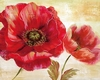 Passion for Poppies I - Nan - comprar online