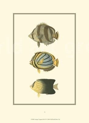 Antique Tropical Fish IV - Vision Studio - comprar online