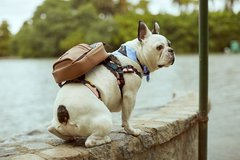 DOG BACKPACK LANDSCAPE BLACK - comprar online