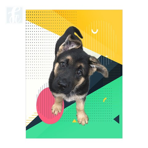 Placa Decor Pet Personalizada - Geometric Color