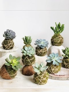 Workshop online kokedama